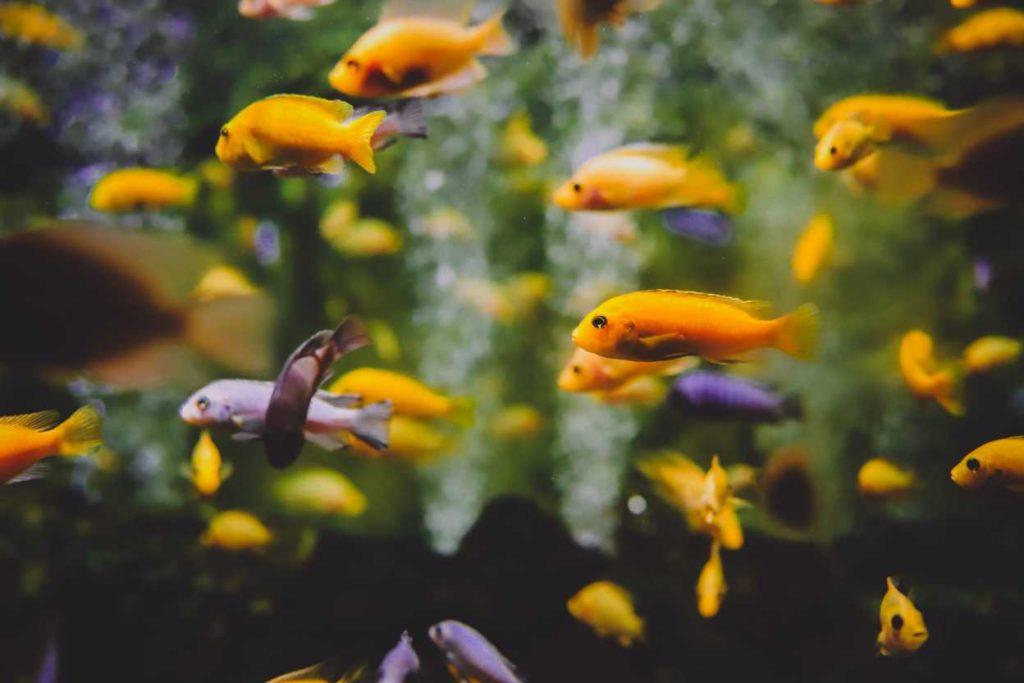 Sydney-Aquarium-1024x683
