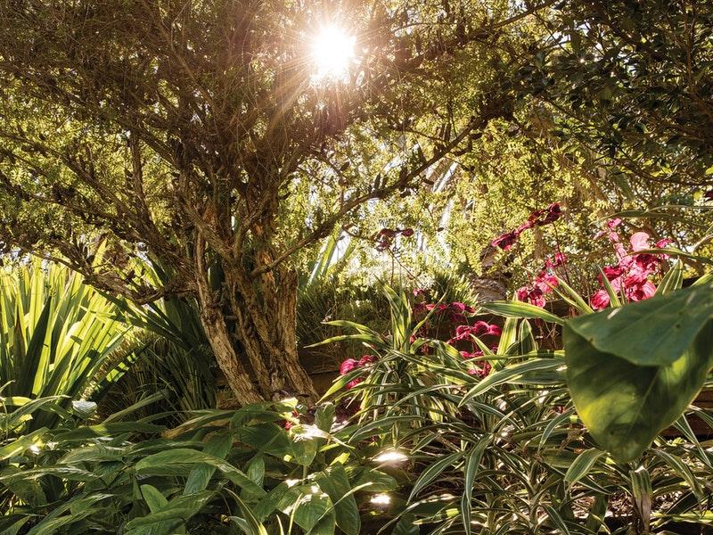 Wendy-Whiteleys-Secret-Garden
