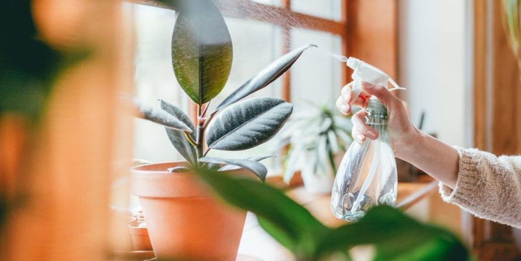 Photos Plants